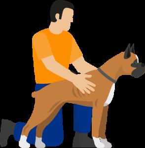 asigurare-caini-periculosi